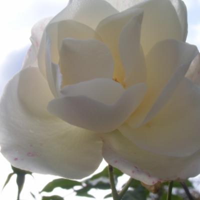 Photos Diverses : Fleurs
